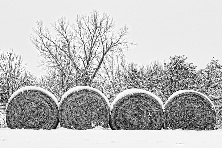 Hay, That's Snow
